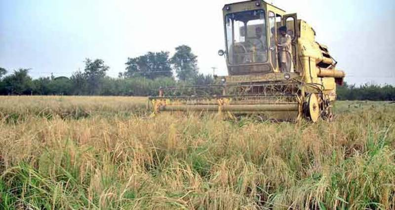 Pakistan's agricultural productivity to decrease by 10% till 2040