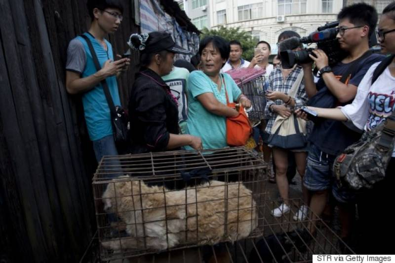 100 dogs saved by Chinese woman during annual Dog Meat Festival