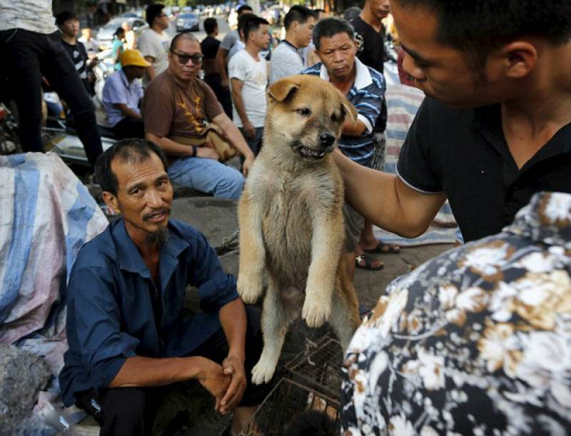 China's cruel canine carnival (WARNING GRAPHIC CONTENT)