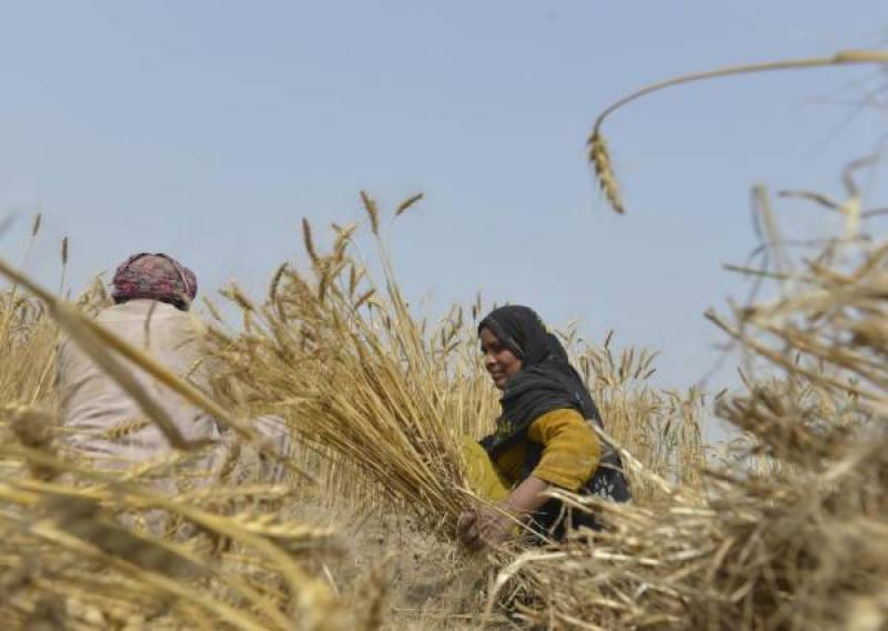 Rs439.8 bln disbursed to agri sector in 11 months