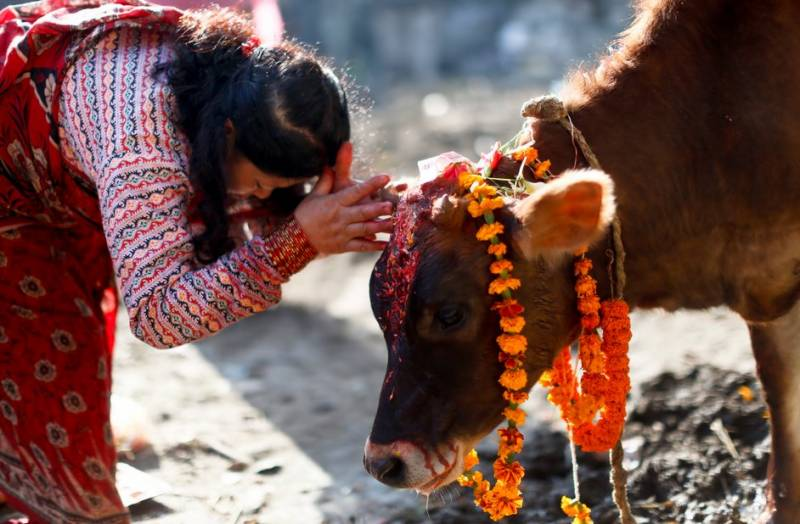 Cow smuggling is equivalent to raping a Hindu girl in India