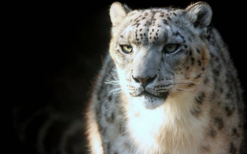 20 beautiful animals on the verge of extinction - two are from Pakistan