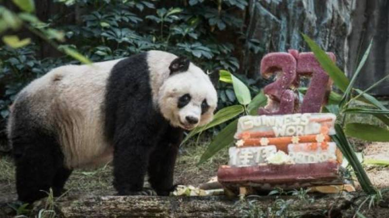 Hong Kong giant oldest panda Jia Jia turns 37