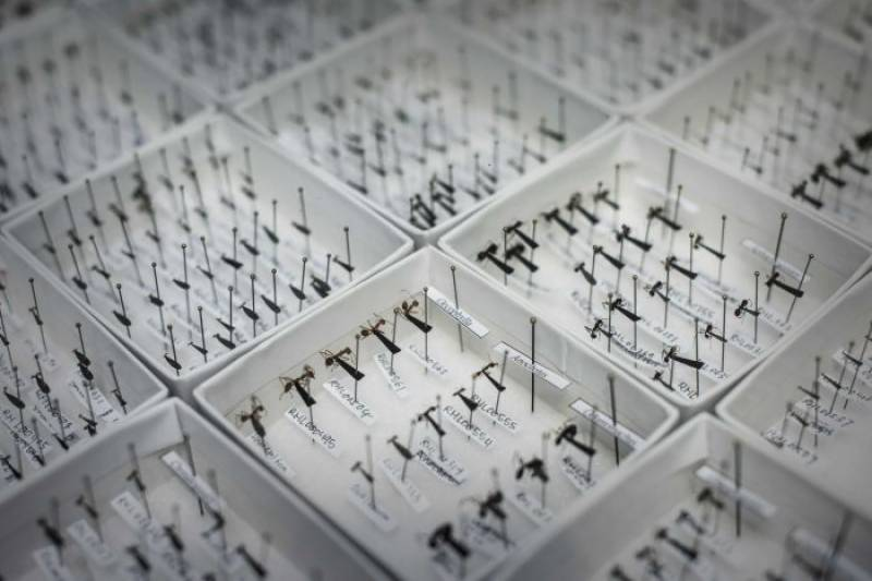 First ever Ant Map launched in Hong Kong