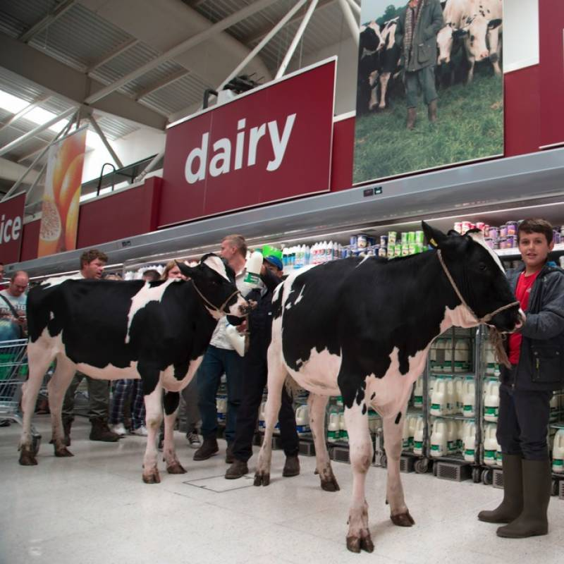Milk is cheaper than bottled-water, farmers take their cows to supermarket in protest