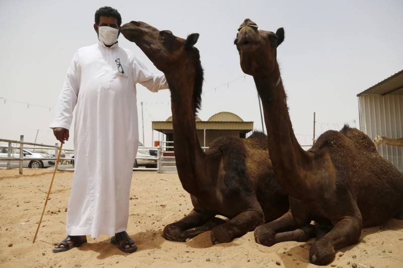 Saudi police arrest Pakistani man in camel urine scam