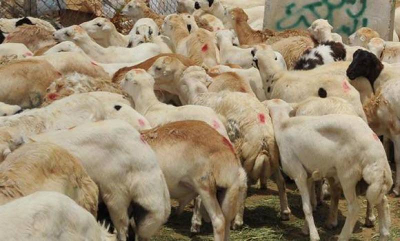 Two mln animals ready for slaughter during Hajj