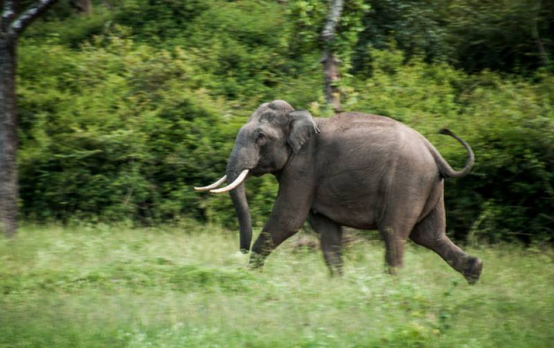 Indian elephant crushes Chinese engineer to death