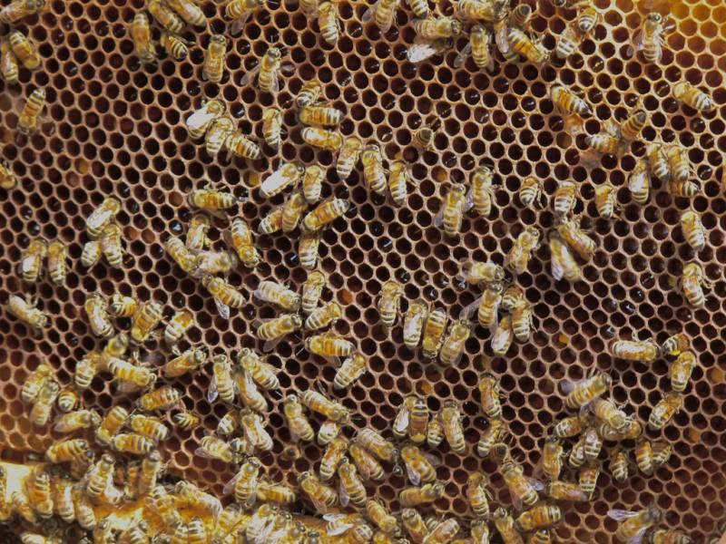 Pakistan has great potential to produce honey : Rashid