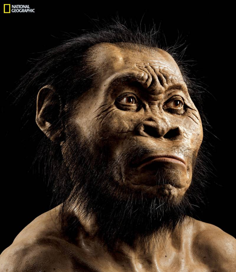 New species of humans discovered in South Africa