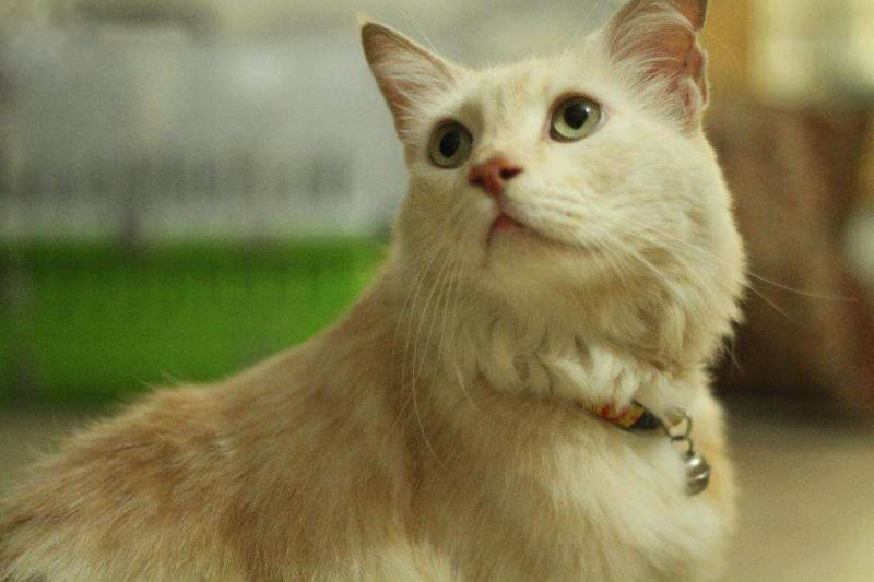 LHC orders pet cat's exhumation to determine cause of death