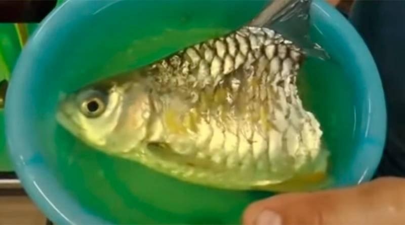 VIDEO: Half-fish survives six months with no trunk or tail