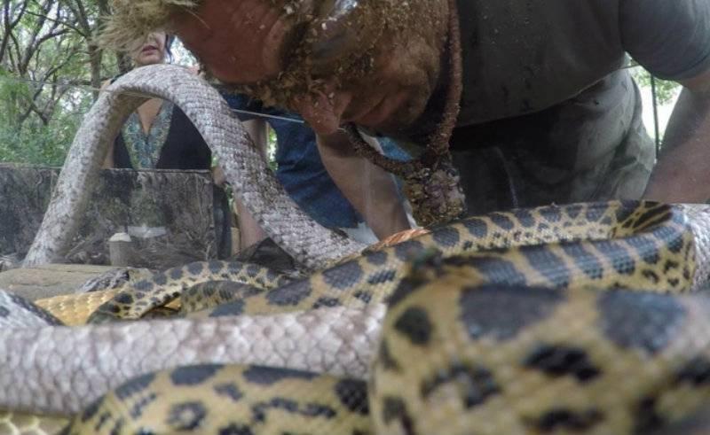 VIDEO: Anaconda bites former Australian cricketer Shane Warne