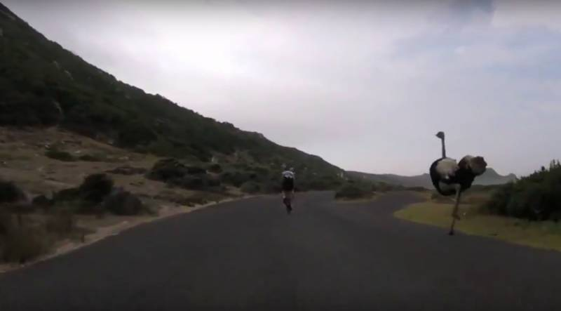VIDEO: Furious ostrich hits 50kph in awesome high-speed chase of cyclists