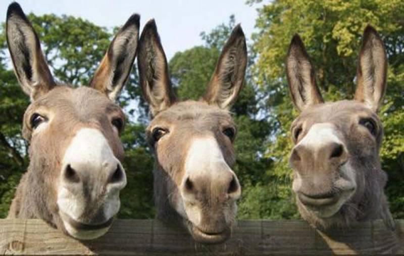 1200kg Donkey meat seized in Punjab