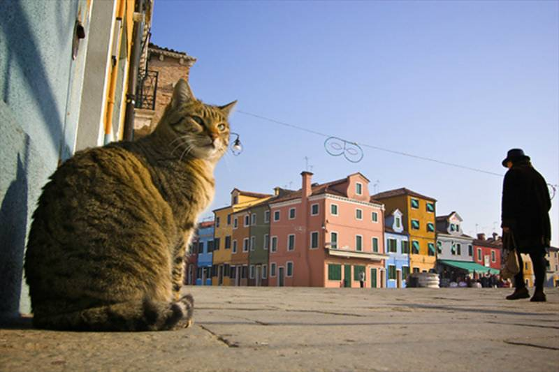 Half a million CATS suggested for Rome's RAT crisis