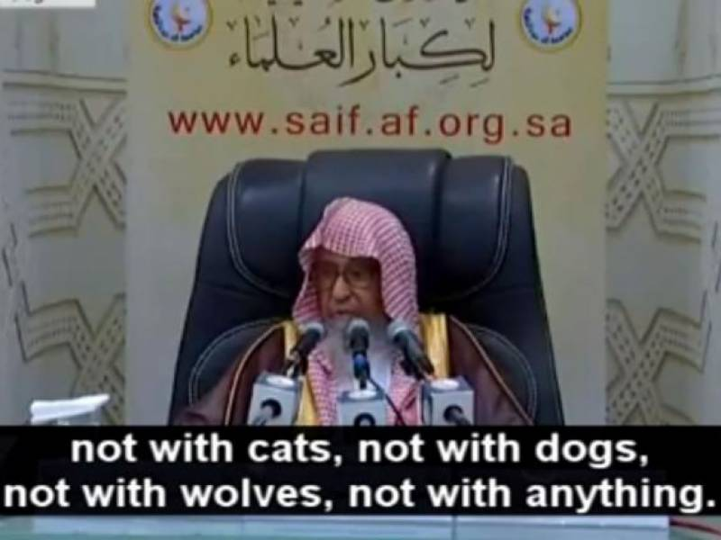 Saudi cleric comes up with new absurd ban, says taking selfies with cats is prohibited