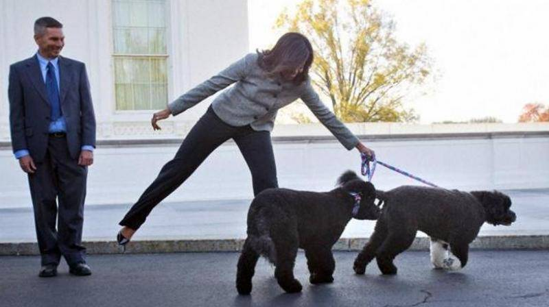 Obama's dogs have schedules and personal assistants, and they are too busy to meet you