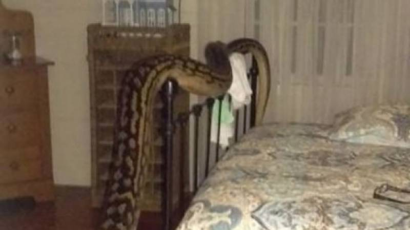 Watch a Brisbane woman getting freaked by the size of this snake in her bedroom