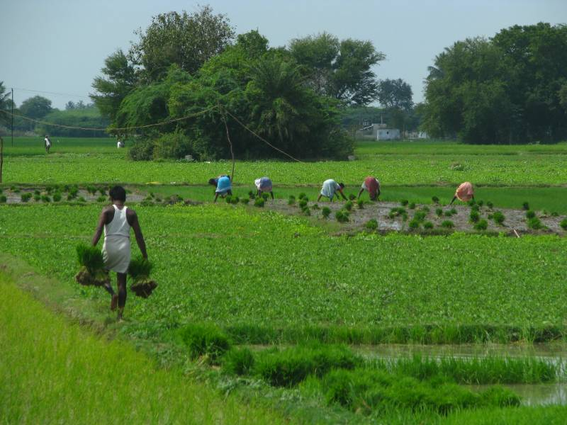 Punjab's agriculture tax revenue dips by 33pc in 2015-16
