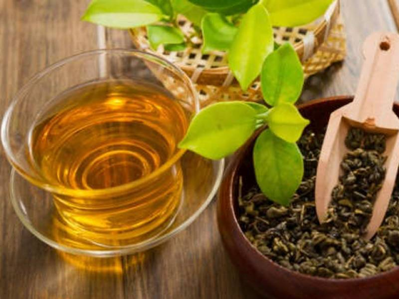 Green tea can cure Down's syndrome: Study
