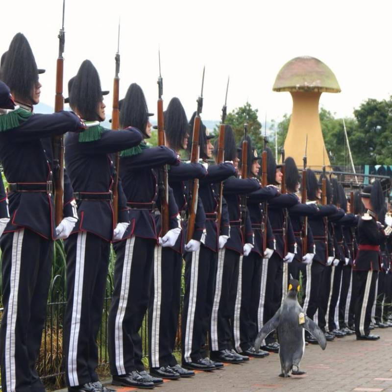 Penguin becomes a Brigadier in Norway, Inspects Norwegian Troops