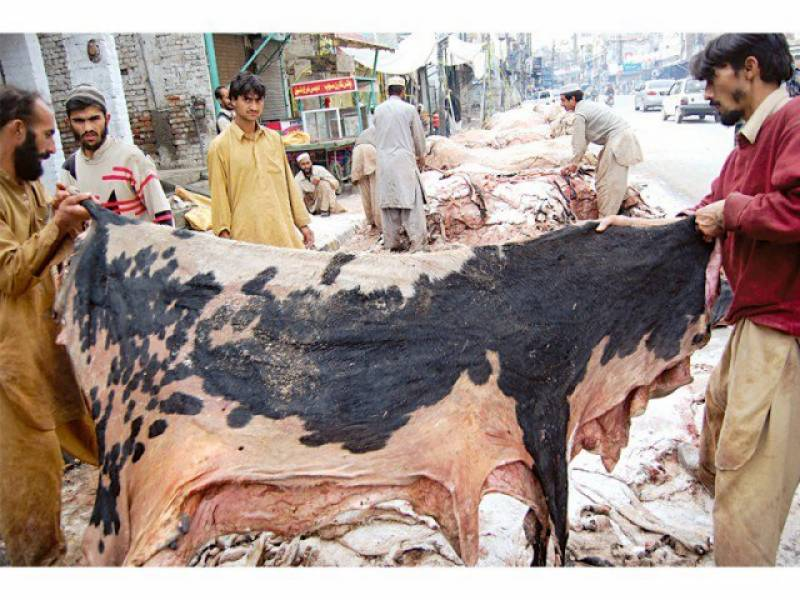 61 organisations barred from collecting hides in Punjab