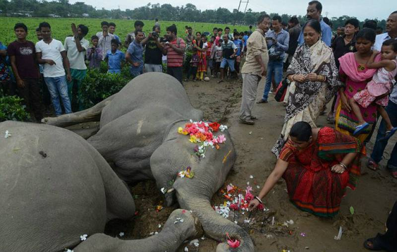 Indian village mourns two elephants who got electrocuted to death