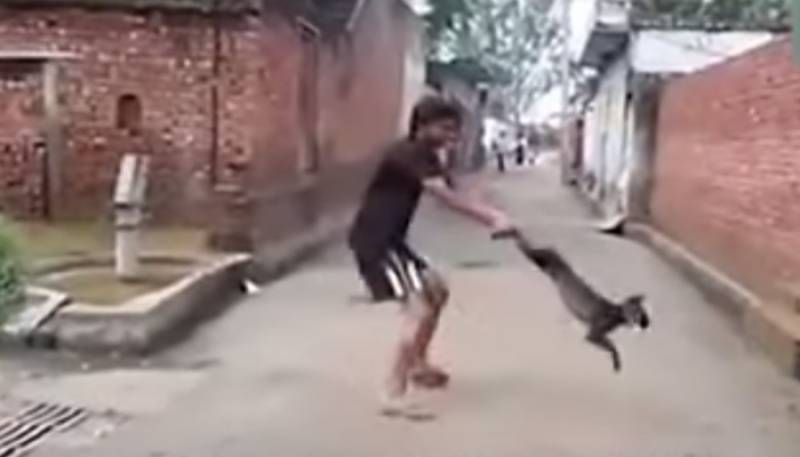 Shocking! Indian youth spins dog, tosses it against wall - Video