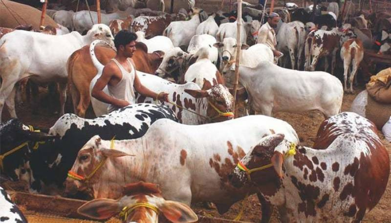 Eid Economy: Rs 200 billion transacted to rural areas this Eid-ul-Azha