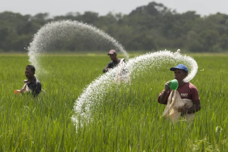 Imported urea price fixed at Rs.1200 per bag