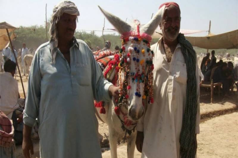 Donkey owner rejects Rs 9 lac offer, demands Rs 11 lac