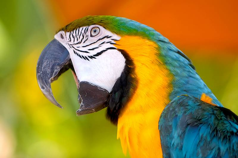 Parrot blows the cover on husband's infidelity, lands him in trouble