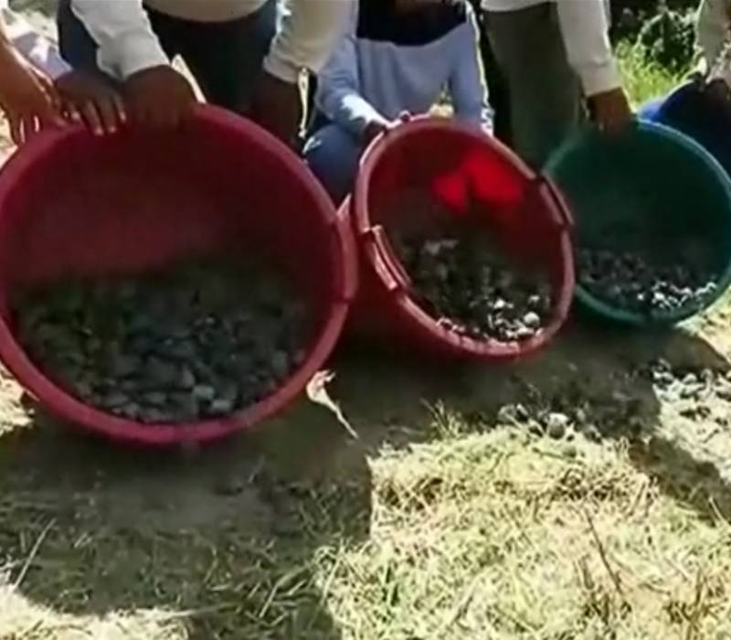 17,000 endangered 'majestic' turtles released into amazon in Peru