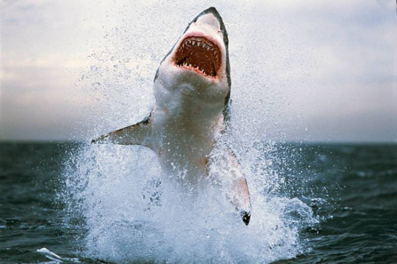 American arrested for punching shark in stomach