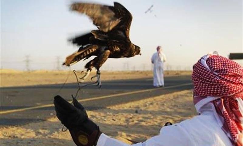 After Saudi princes, Bahraini royal family to hunt houbara bustard in Pakistan