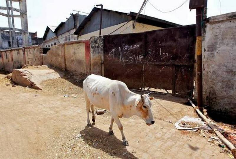 Cow slaughter to be punishable by life sentence in India
