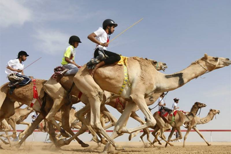 New international federation for camel racing invites the world to promote ancient sport