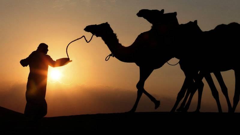 Hundreds of Qatari camels die of thirst amid Saudi boycott
