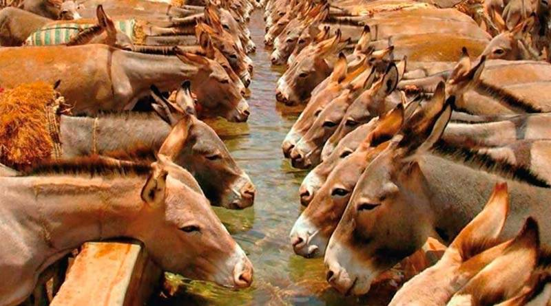 Seven including Chinese national indicted in donkey hides' case