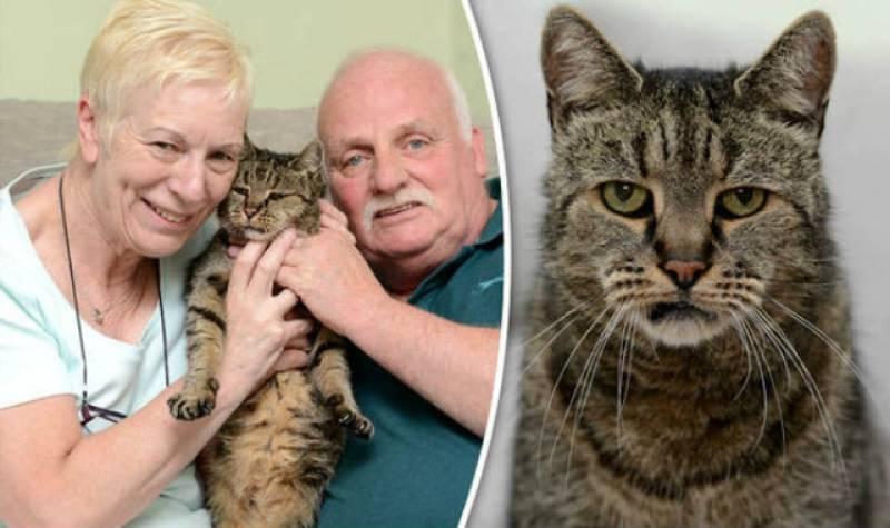 Nutmeg, world's oldest cat, dies at 32