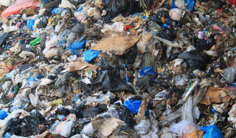 Plastic-eating fungus found in Islamabad rubbish dump
