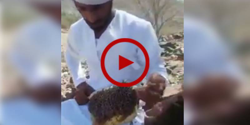 Daredevil extracts honey while defying safety measures