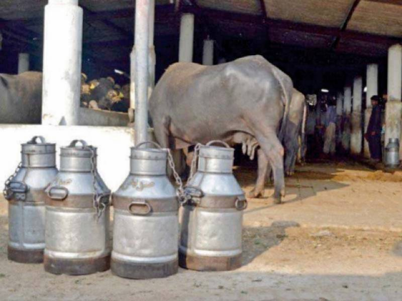 Availability of pure milk almost impossible in 'Land of the pure', Senate body told