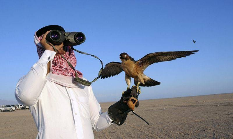 Bahraini king, other govt officials to hunt houbara bustard in Pakistan again