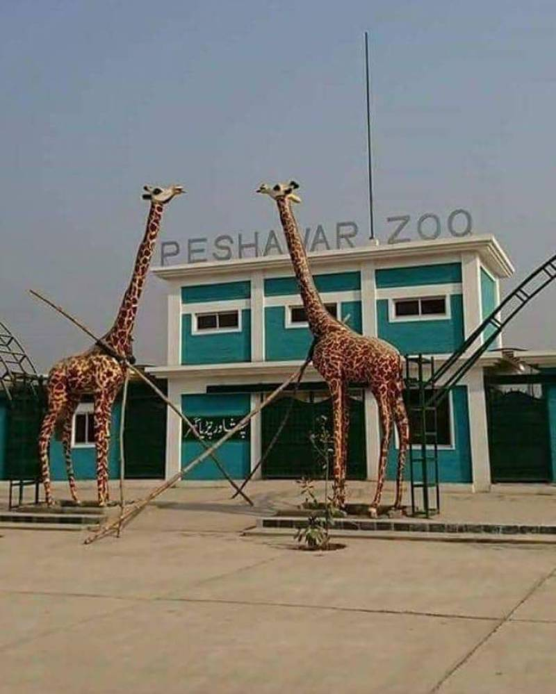 Khyber Pakhtunkhwa's first zoo opens doors to public in Peshawar