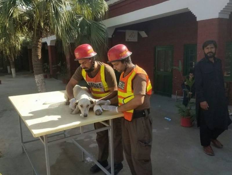 Peshawar rescue workers save stray dog's life, win the hearts of animal lovers