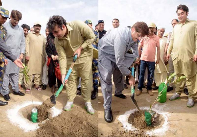 Sindh sets Guinness World Record by planting over one million mangroves