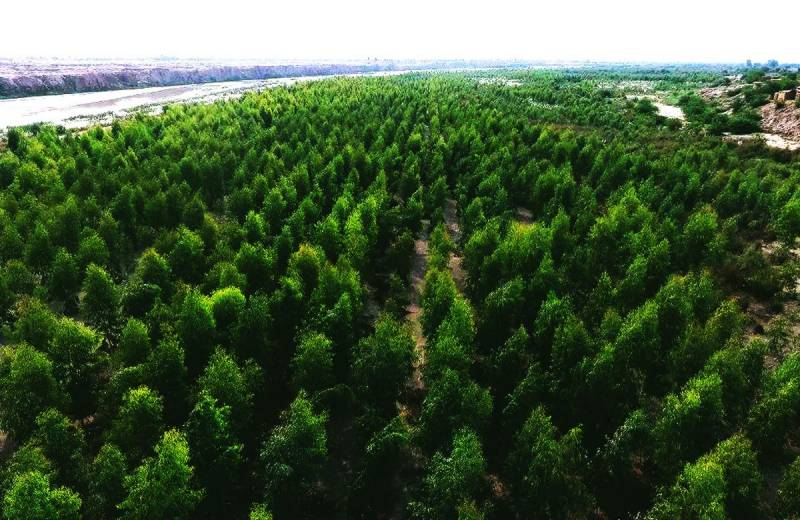 GreenPromise program: 10 bln sampling to be planted by PTI govt in next five years