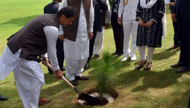 PM Khan plants a tree at foreign office